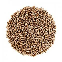 semillas cilantro 100 gr